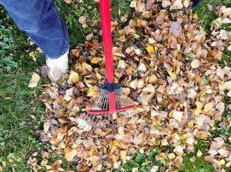 A man's foot with a pile of brown leaves and a red rake