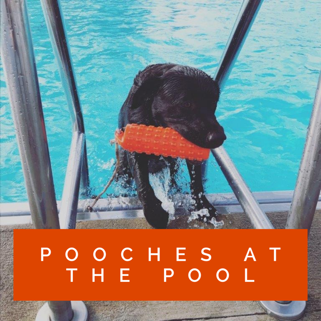 Pooches at the Pool 2020