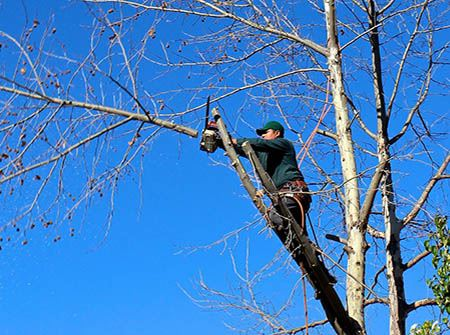A man in a tree cuts a branch with a blue sky in the background